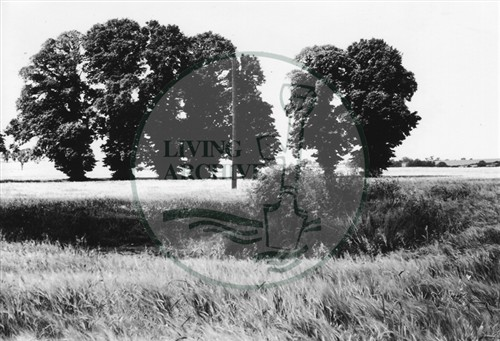 Photograph of Old Bradwell archaeological site (1971).