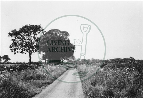 Photograph of lane leading from Loughton (1971).