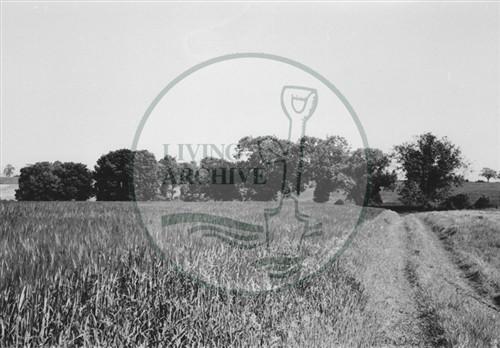 Photograph of farmland now Central Milton Keynes (1971).