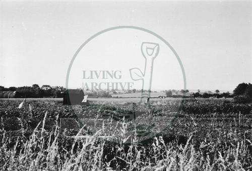 Photograph of allotments at Old Bardwell (1971).