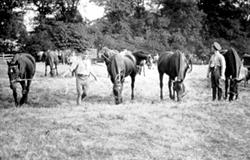 Army horses