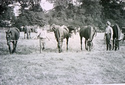 Slide of horses grazing.