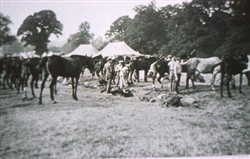 Slide of horses tethered at Wolverton Camp,
