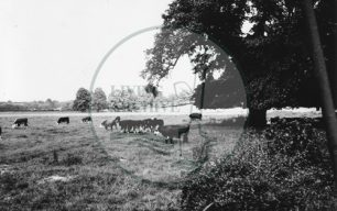 Photograph of Manor Farm Old Wolverton (1972).