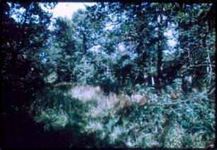 Linford Wood
