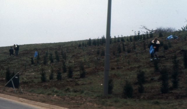 A grassy road bank