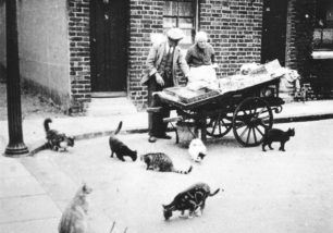 Fish man with his cart in the street, and cats.