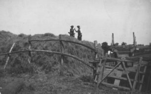 Haymaking in Common Lane, Old Bradwell.