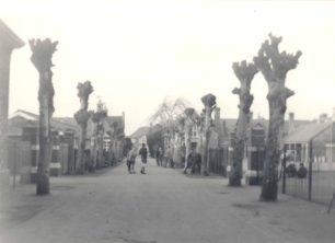 Avenue of trees, Old Leon School