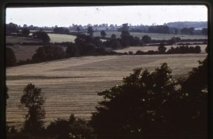 Fields and trees near Willen