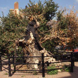 Wesley Tree with railings