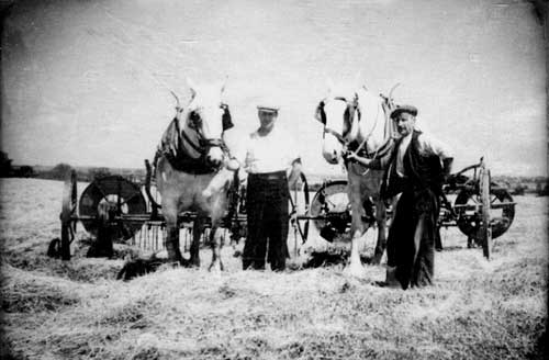 Picture of Great Grandad and his cousin Will Webb with the workhorses